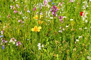flower-meadow-2375714_1920