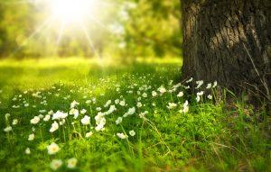 spring-276014_1920