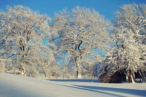 winter-1861695_640